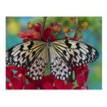 Sammamish, Washington. Tropical Butterflies 63 Postcard