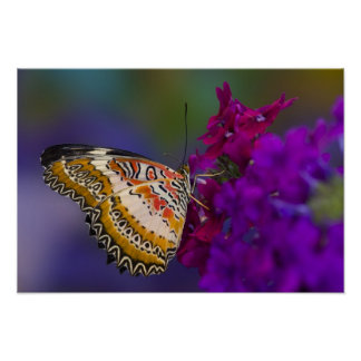 Sammamish, Washington. Tropical Butterflies 64 Poster