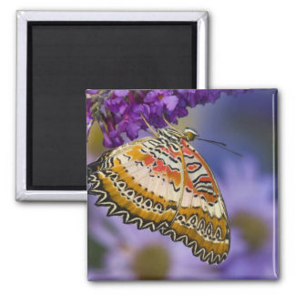 Sammamish, Washington. Tropical Butterflies 65 2 Inch Square Magnet