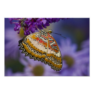 Sammamish, Washington. Tropical Butterflies 65 Poster