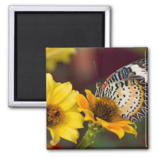 Sammamish, Washington. Tropical Butterflies 66 2 Inch Square Magnet