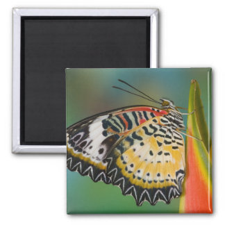 Sammamish, Washington. Tropical Butterflies 67 2 Inch Square Magnet