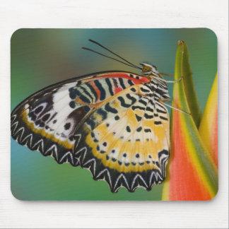 Sammamish, Washington. Tropical Butterflies 67 Mouse Pad