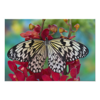 Sammamish, Washington. Tropical Butterflies 67 Photo Print