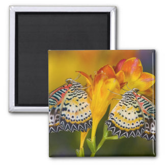 Sammamish, Washington. Tropical Butterflies 68 2 Inch Square Magnet