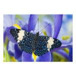 Sammamish, Washington. Tropical Butterflies 69 Photo Print