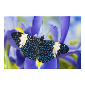 Sammamish, Washington. Tropical Butterflies 69 Photo Print