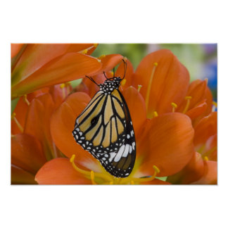 Sammamish, Washington. Tropical Butterflies 69 Poster