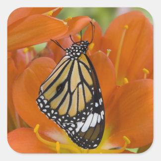 Sammamish, Washington. Tropical Butterflies 69 Square Sticker