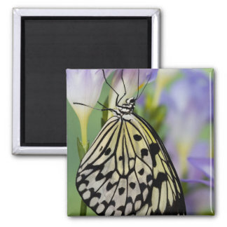Sammamish, Washington. Tropical Butterflies 6 2 Inch Square Magnet