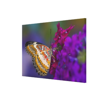 Sammamish, Washington. Tropical Butterflies 6 Canvas Print