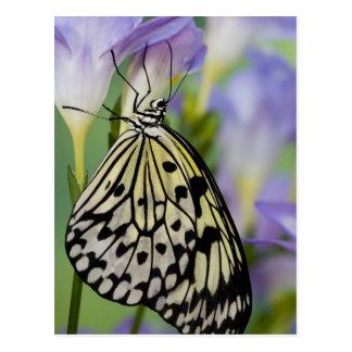 Sammamish, Washington. Tropical Butterflies 6 Postcard