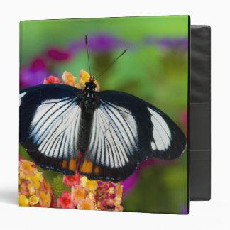 Sammamish, Washington. Tropical Butterflies 70 3 Ring Binder