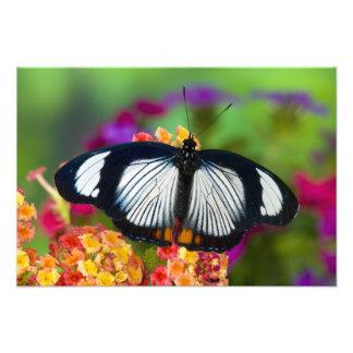 Sammamish, Washington. Tropical Butterflies 70 Photo Print