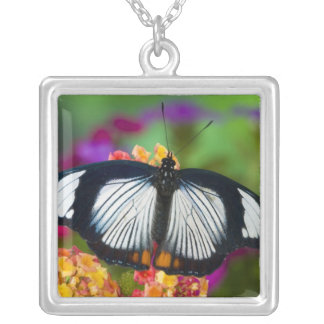 Sammamish, Washington. Tropical Butterflies 70 Silver Plated Necklace