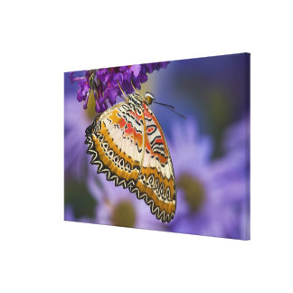 Sammamish, Washington. Tropical Butterflies 7 Canvas Print