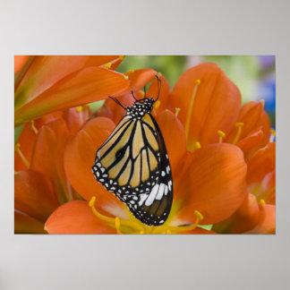 Sammamish, Washington. Tropical Butterflies 7 Poster