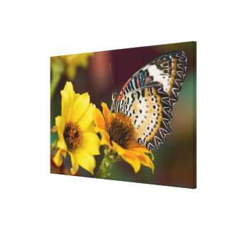Sammamish, Washington. Tropical Butterflies 8 Canvas Print