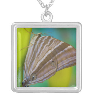 Sammamish, Washington. Tropical Butterflies 8 Silver Plated Necklace