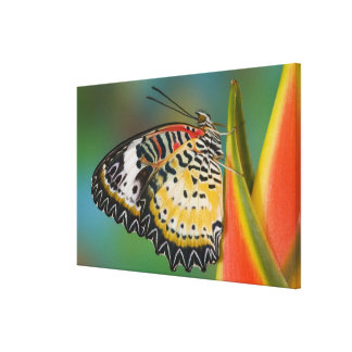 Sammamish, Washington. Tropical Butterflies 9 Canvas Print