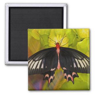 Sammamish, Washington. Tropical Butterflies 9 Fridge Magnets