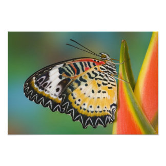 Sammamish, Washington. Tropical Butterflies 9 Photo Print