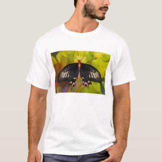 Sammamish, Washington. Tropical Butterflies 9 T-Shirt