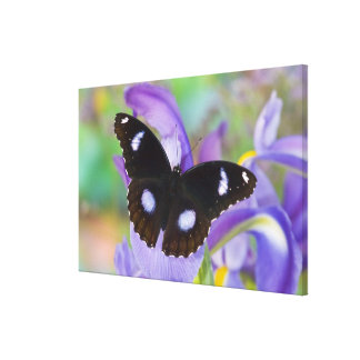 Sammamish Washington Tropical Butterflies Canvas Print
