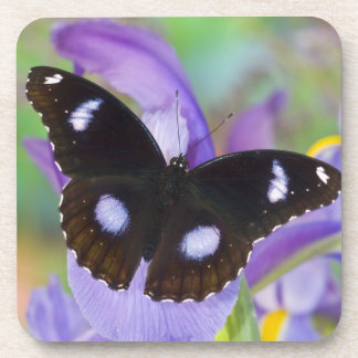 Sammamish Washington Tropical Butterflies Coasters