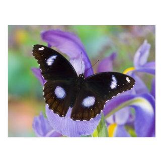Sammamish Washington Tropical Butterflies Postcard