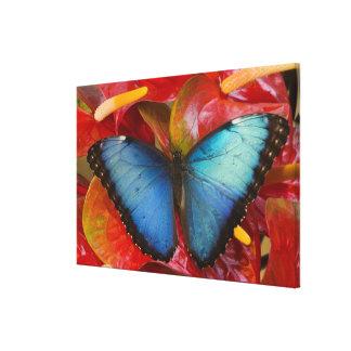 Sammamish Washington Tropical Butterfly 10 Canvas Print