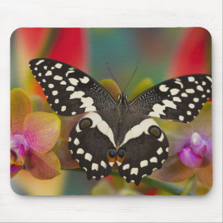 Sammamish, Washington Tropical Butterfly 10 Mouse Pad