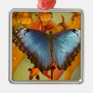 Sammamish Washington Tropical Butterfly 10 Christmas Ornaments