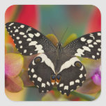 Sammamish, Washington Tropical Butterfly 10 Square Sticker