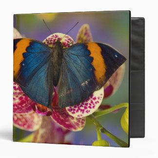 Sammamish Washington Tropical Butterfly 11 3 Ring Binders