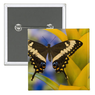 Sammamish, Washington Tropical Butterfly 11 Pinback Buttons