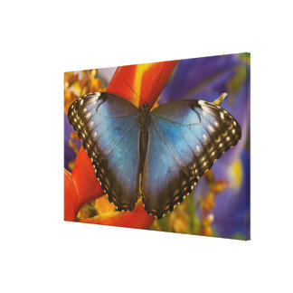 Sammamish Washington Tropical Butterfly 11 Canvas Print