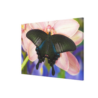 Sammamish, Washington Tropical Butterfly 11 Canvas Print