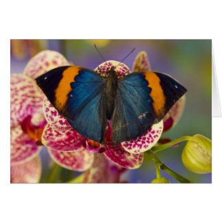 Sammamish Washington Tropical Butterfly 11 Greeting Card