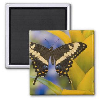 Sammamish, Washington Tropical Butterfly 11 Fridge Magnets