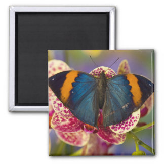 Sammamish Washington Tropical Butterfly 11 Magnets