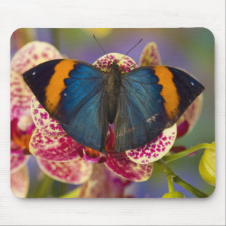Sammamish Washington Tropical Butterfly 11 Mouse Pad