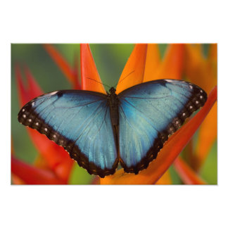 Sammamish Washington Tropical Butterfly 11 Photo Print