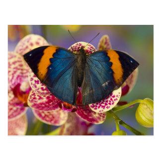 Sammamish Washington Tropical Butterfly 11 Postcard