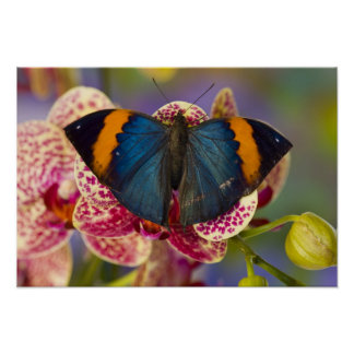 Sammamish Washington Tropical Butterfly 11 Poster