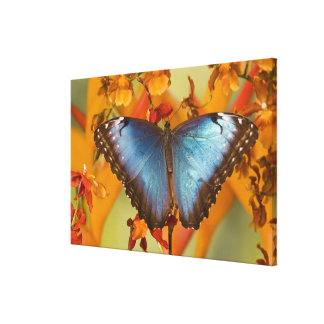 Sammamish Washington Tropical Butterfly 12 Canvas Print