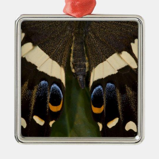 Sammamish, Washington Tropical Butterfly 12 Metal Ornament