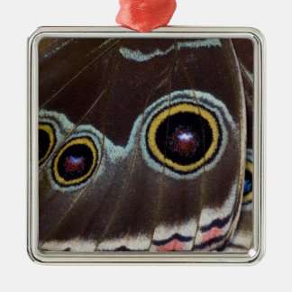 Sammamish Washington Tropical Butterfly 12 Ornaments