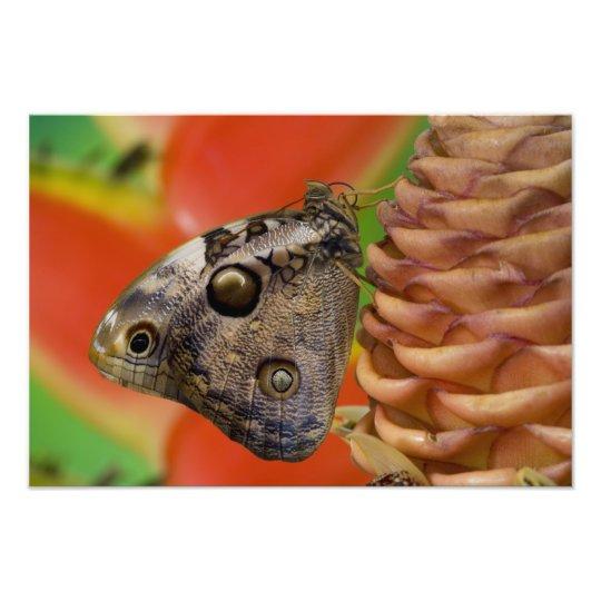 Sammamish, Washington Tropical Butterfly 12 Photo Print