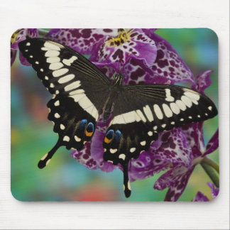 Sammamish, Washington Tropical Butterfly 13 Mouse Pad